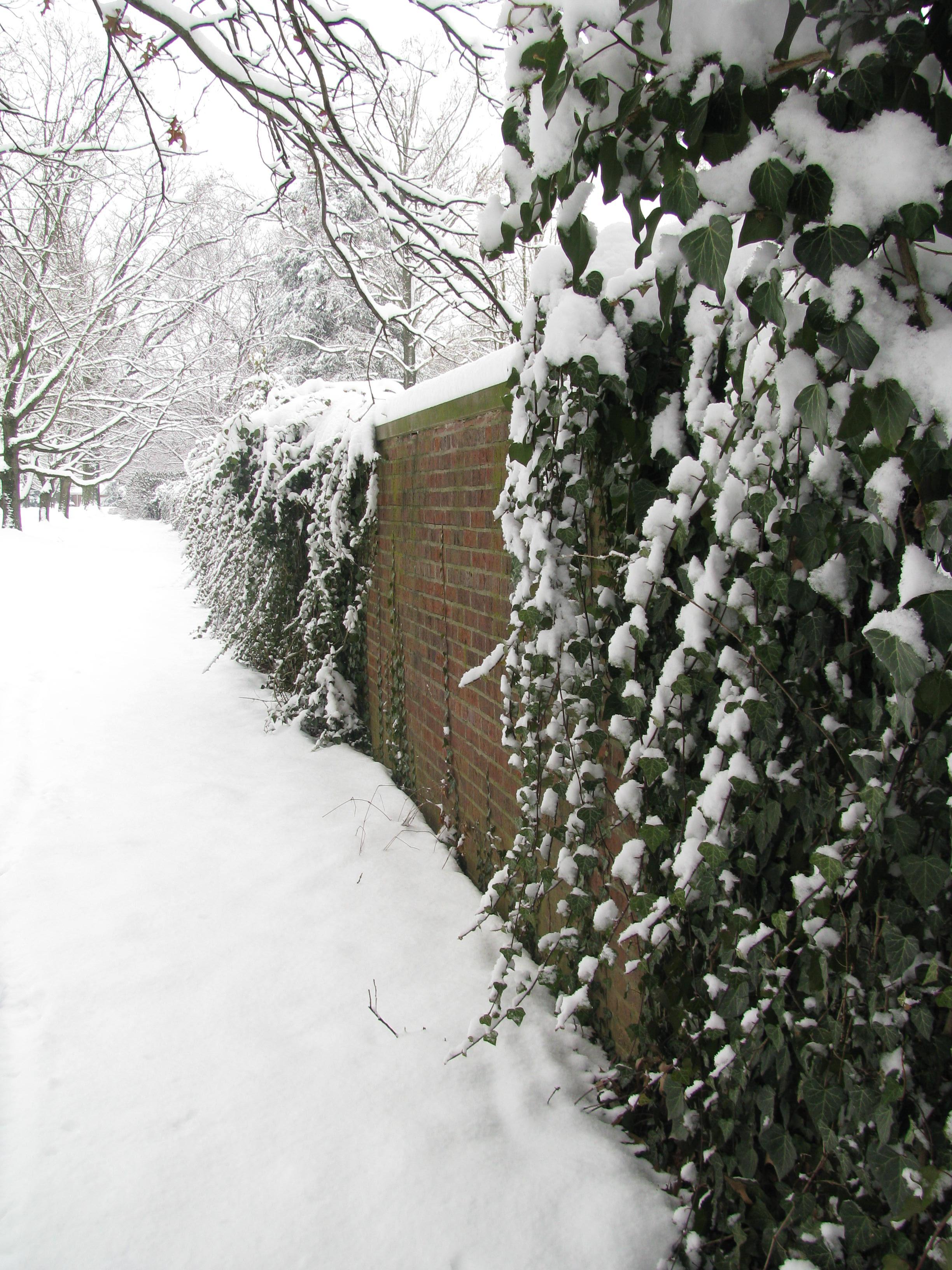 snow at LPTS