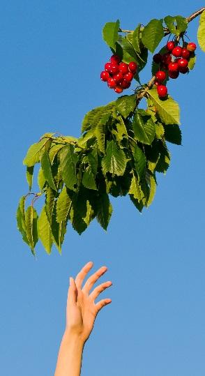 Cherry Picking Faith